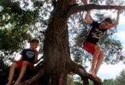 Afbeelding - De beste basisschool die past bij jouw manier van opvoeden waar je kind de beste versie van zichzelf kan worden - happy parents happy kids twee kinderen die leren in een boom